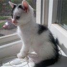 Ищет постоянный дом котенок Франц 2 мес.