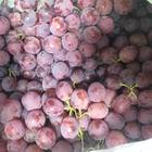 Виноград Ред глоуб недорого