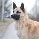 Чудесный пес Родик ищет дом