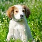Самые милые на свете щенки в добрые руки