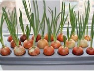 Грядка гидропонная для выращивания лука в домашних условиях Грядка домашняя гидр