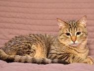 Ищет дом котенок Матросик Славный подросточек уютного полосатого окраса ищет дом