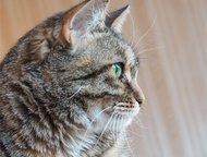 Ласковая кошечка Масяня ищет дом Если вы ищете ласковую кошку, которая будет сог