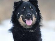 Собака - медвежонок в добрые руки Микуша бодрый и озорной мальчишка. Весёлые веч