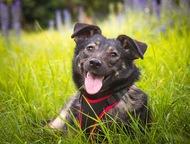 Трепетная собака Варя в добрые руки Варюша - самая обыкновенная дворняжка. Без р