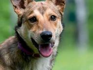 Солнечный пес Рекс в дар, в добрые руки Рекс очень весёлый, жизнерадостный и заб