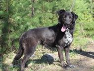 Собака Гретта в дар, в добрые руки Возраст 1 год, здорова, обработана от паразит
