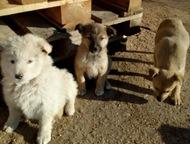 Очаровательные щенки ищут дом Не оставайтесь равнодушными! Помогите щеночкам, ко