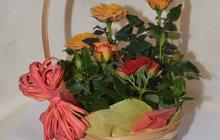 Розы мини в горшке и корзине