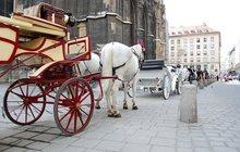 Собираетесь в Вену?