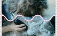 Школа груминга Балути - курсы по уходу за домашними животными, Москва
