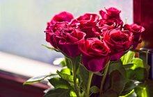 Розы с бесплатной доставкой