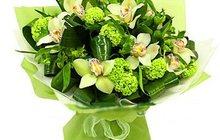 Многообразие орхидей для вас