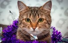 Ищет любящую семью кошечка Мелани