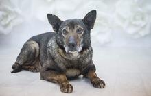 Спокойный добродушный пес ищет семью