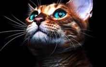 Зоотовары оптом, товары для животных