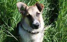 Ищем дом замечательному щенку Линде