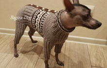 Вязаная одежда для Ксоло и КХС, Перуанских голых собак