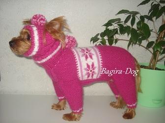 Скачать бесплатно фотографию Одежда для собак Одежда для собак и кошек Bagira-Dog 18275192 в Москве