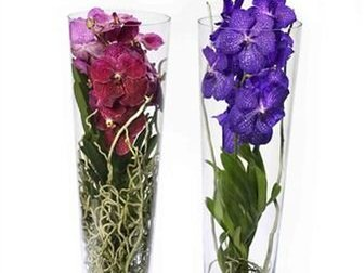Скачать бесплатно foto Разное Орхидея Ванда в стеклянной вазе 32337025 в Москве