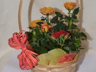 Новое фотографию Разное Розы мини в горшке и корзине 32427802 в Москве