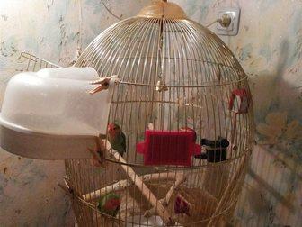 Увидеть foto Птички Розовощекие неразлучники с большой клеткой 32522826 в Москве