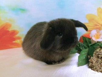 Увидеть изображение  Декоративные карликовые кролики, питомник в Москве 32715885 в Москве