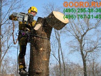 Новое фото Разные услуги Услуга обрезка деревьев в городе 33309873 в Москве