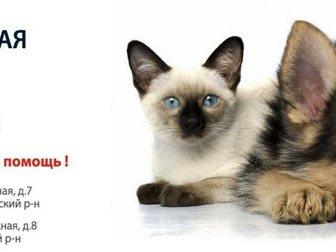 Скачать бесплатно фотографию Продажа домов УшиХвост- услуги для животных! 34481253 в Москве