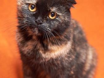 Новое foto  Вислоухая кошечка Соня в добрые руки! 44354510 в Москве