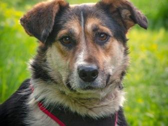 Новое изображение  Добрый пес Рони в добрые руки, 44555989 в Москве