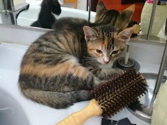 Новое foto  Очаровательные котята в добрые руки, в дар, 45033789 в Москве