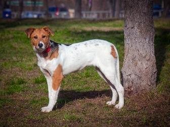 Скачать фотографию  Самый милый щенок Майло в добрые руки! 50050702 в Москве
