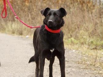 Скачать foto  Красивая чёрная собака Берта в добрые руки, 50054732 в Москве