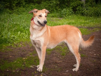 Увидеть фотографию  Изящная, красивая собака в добрые руки! 50087116 в Москве
