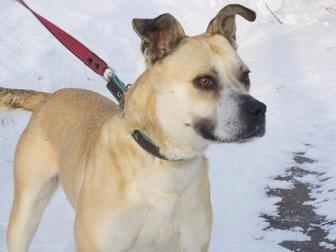 Увидеть foto  Ищет дом удивительно умная собака-улыбака, 56334609 в Москве
