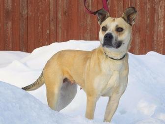 Просмотреть фотографию  Ищет дом удивительно умная собака-улыбака, 56334609 в Москве