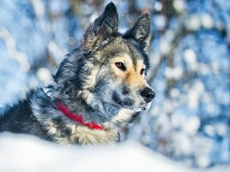 Новое foto  Красивая собака Луна в добрые руки, 57234097 в Москве