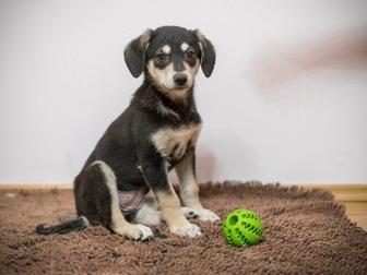 Скачать фото  Очаровательные щенки Боня и Таксена ищут дом, 58365206 в Москве