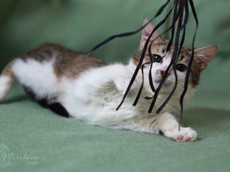 Уникальное изображение  Очаровательная кошечка Люсси ищет дом! 58627200 в Москве