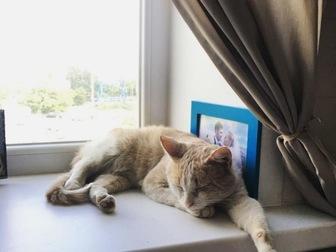 Скачать бесплатно изображение  В добрые руки рыжий котик! 67639320 в Москве