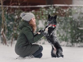 Новое foto  Маленькая собака Нора в добрые руки, 67657717 в Москве