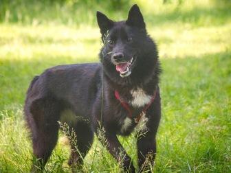 Просмотреть фотографию  Маленькая собака Нора в добрые руки, 67657717 в Москве