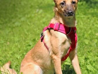 Уникальное изображение  Чудесная собака Чили в добрые руки, 67664938 в Москве