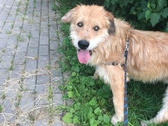 Новое фотографию  Космический пёс, звать УХО! 67668201 в Москве