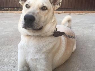 Скачать бесплатно изображение  Отдам собаку в добрые руки 68117598 в Краснодаре