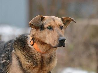 Свежее фотографию  Чудесный пес Бутч ищет дом, 68121956 в Москве