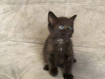 Уникальное foto  Ищет дом очаровательный котенок (девочка), 68132115 в Москве