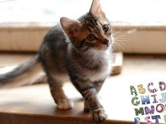 Просмотреть фото  Очаровательный котенок (мальчик) в добрые руки, 68178961 в Москве