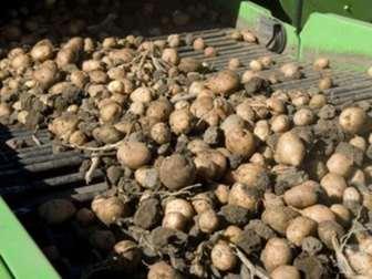 Свежее foto  Продам сельхозпредприятие, кфх, выращивание картофеля, производственная база 70210982 в Кемерово